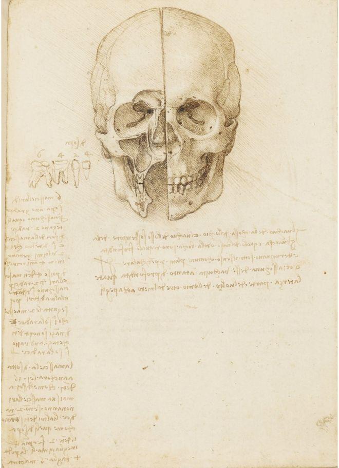 An anatomical drawing of a skull by Leonardo da Vinci