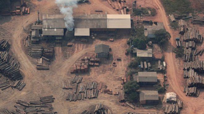 انسان 'درحال باختن نبرد برای مقابله با جنگلزدایی است'