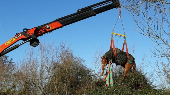 Horse winched to safety from footbridge