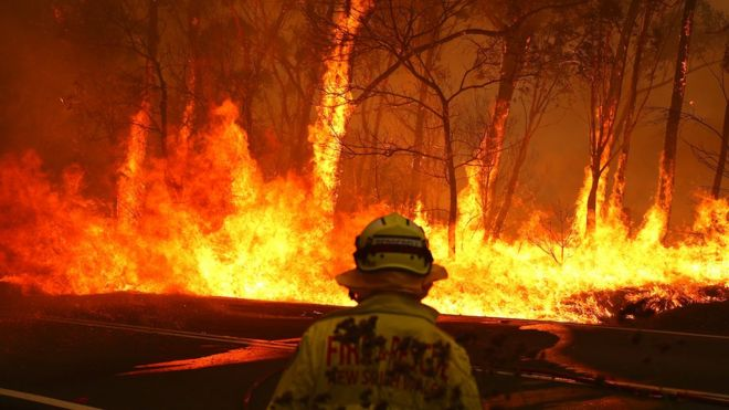 A firefighter faces a huge blaze that has engulfed several trees