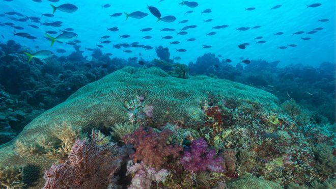 A República de Palau e suas ilhas são um destino famoso entre os amantes de mergulho, por seus recifes intocados e vida marinha subaquática abundante