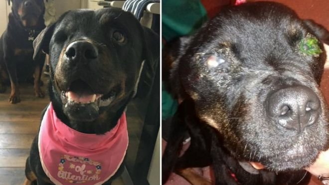 Owner S Animal Ban After Neglecting Dog Bbc News