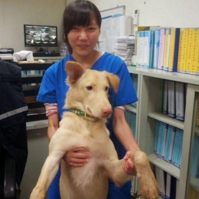 d6f57e3f4609 La desgarradora historia de la veterinaria que se suicidó con el ...