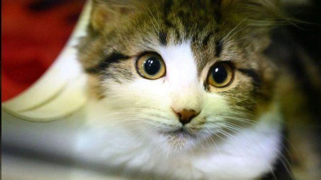 ممنوعیت خوردن گوشت سگ و گربه در اولین شهر چین