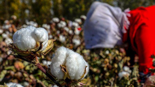 中国生产占全球约20%的棉花,其中大部分来自新疆。