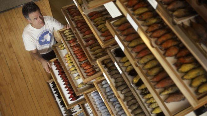 Ученый 40 лет собирал тушки птиц. Выяснилось, что птицы становятся меньше