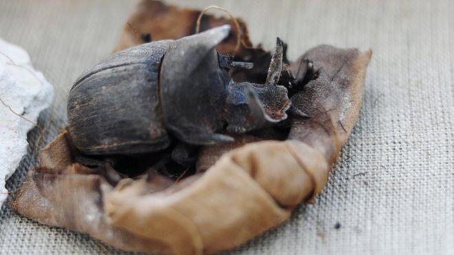 Mumi Kucing dan Kumbang Ditemukan di Makam Kuno Mesir