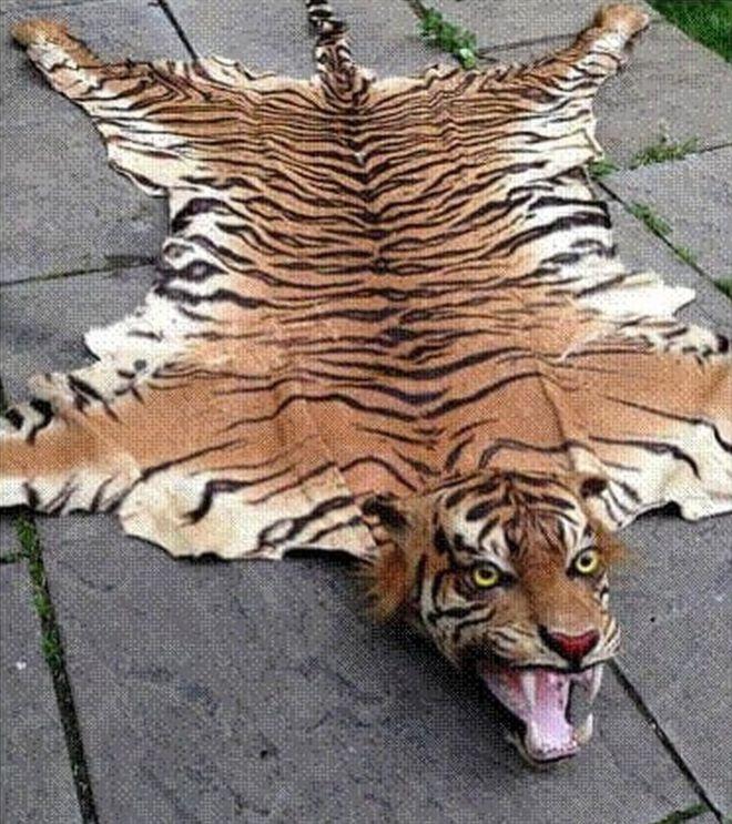 trader sold extinct tiger skin rugs on ebay bbc news