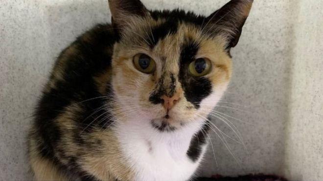 Gambar Kucing Bersantai Yang Dibuat 2 000 Tahun Lalu Ditemukan Di Nazca Peru Bbc News Indonesia