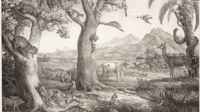 Croqui de Von Martius