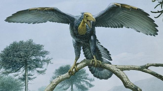 Image result for archaeopteryx dinosaur