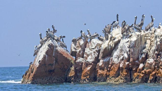 Guano en las islas de Perú