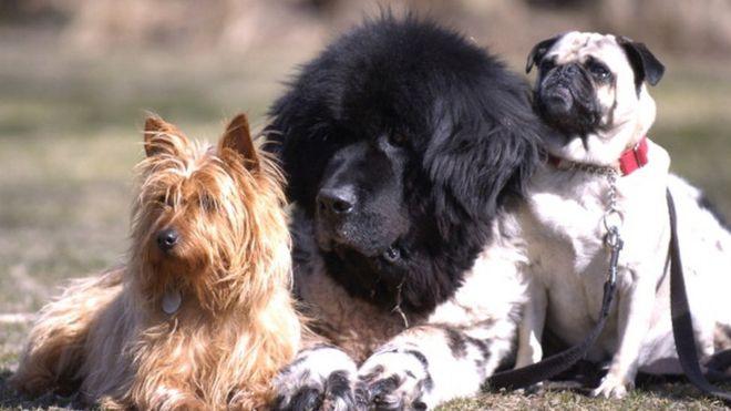Мэр французского города запретил собакам лаять