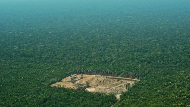 Amazon rainforest deforestation \'worst in 10 years\', says ...