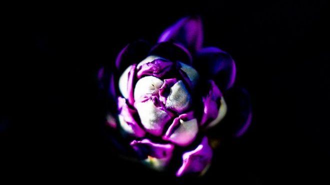 نبتة من الرودودندرون