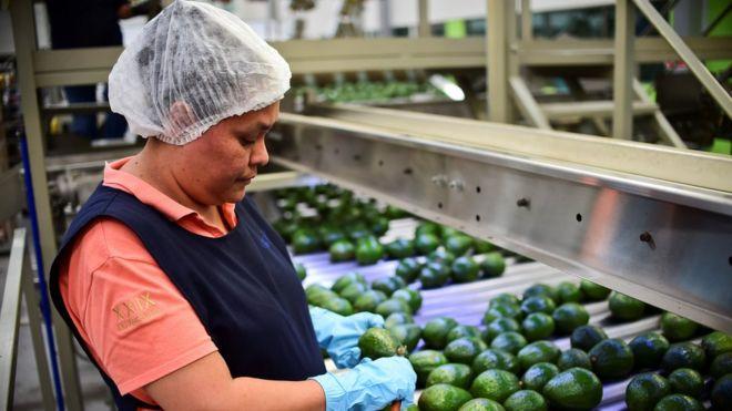 Una mujer trabaja en una planta de procesado de aguacate en el estado mexicano de Michoacán