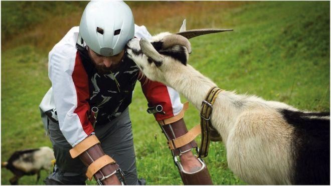 Ig Nobel win for Alpine 'goat man' - BBC News
