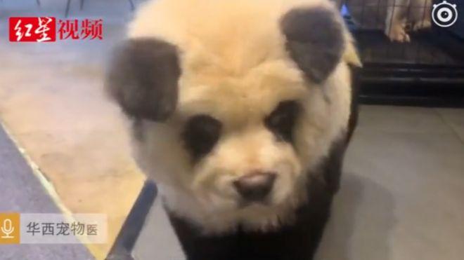 109326828 panda