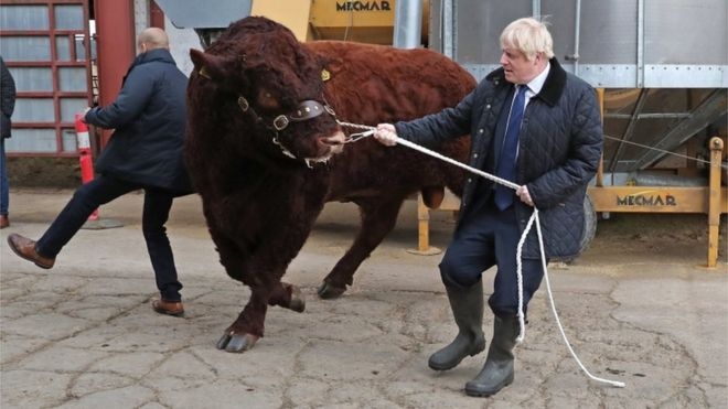 A bull bumps into a plain clothes police officer (left) while being walked by Prime Minister Boris Johnson during his visit to Darnford Farm in Banchory near Aberdeen