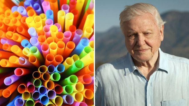 Sir David Attenborough series Dynasties tackles nature's