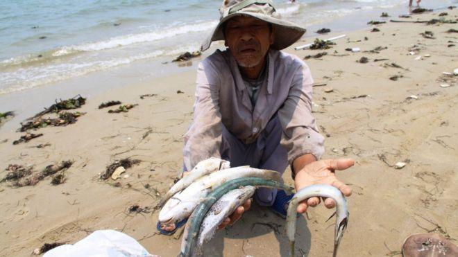 Việt Nam, môi trường, Formosa