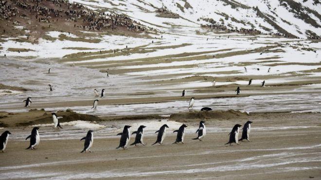 Температура в Антарктике впервые поднялась выше плюс 20°C