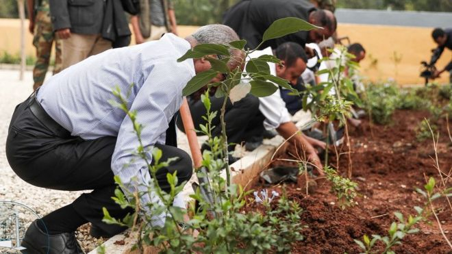Ethiopia 'breaks' tree-planting record to tackle climate