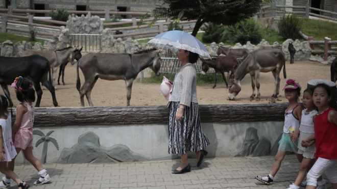 Image of: Legendary Extinct North Korean Woman Walks Past By Donkey Pen At The Newly Opened Pyongyang Central Bbc North Koreas National Zoo Donkeys Dinosaurs And Dogs Bbc News