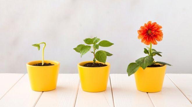 Cómo las plantas con flores evolucionaron y conquistaron el mundo ...