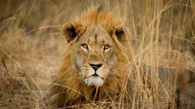 'Karizmatik' hayvanların soyları tükeniyor(17 Nisan 2018)
