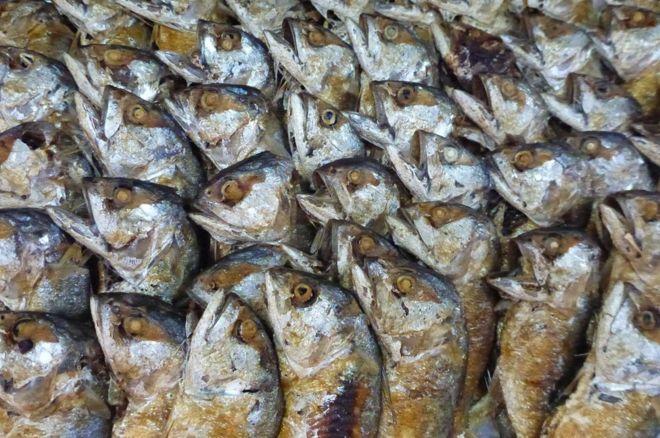 أسماك في السوق