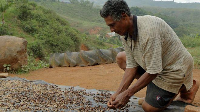 Hombre trabaja con café que se seca al sol (Foto: Natalio Cosoy/ BBC Mundo)
