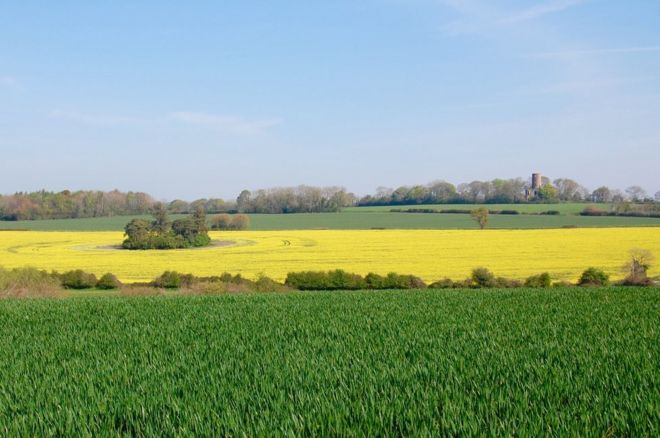 Green and yellow fields in front of Racton Monument
