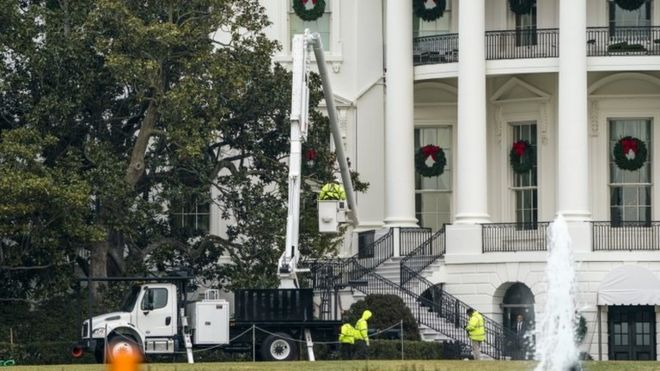 The White Houses Famous Magnolia Tree To Be Cut Back Bbc News