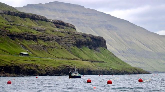 Seaweed farming Faroe Islands