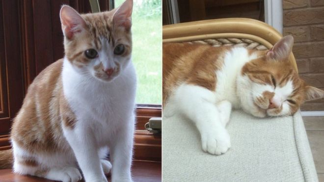 Lost Cat Reunited With Owner After Ten Years