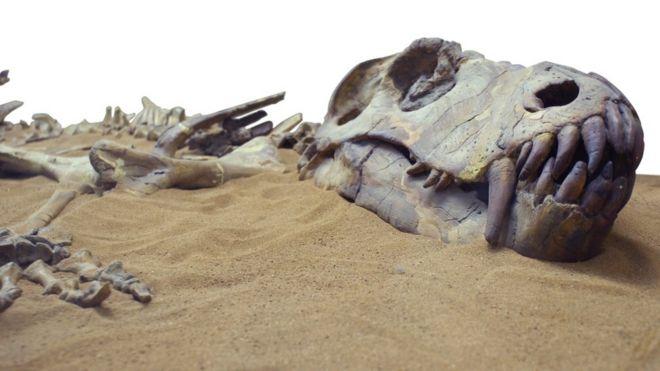 Fósseis de dinossauro na areia