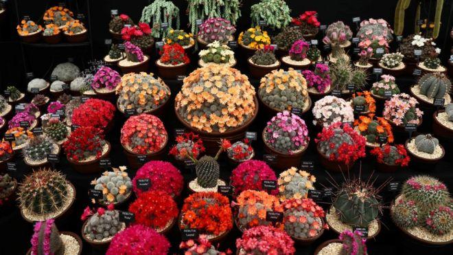 A display of cacti