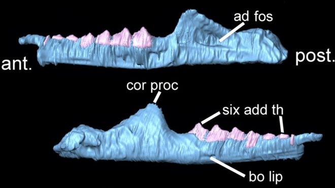 Part of the 3D skeleton modelled from the fossil remains found in south Wales