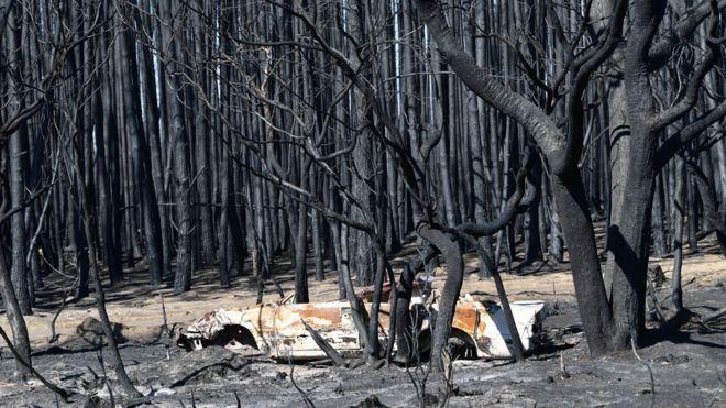 Fire damage in Kangaroo Island