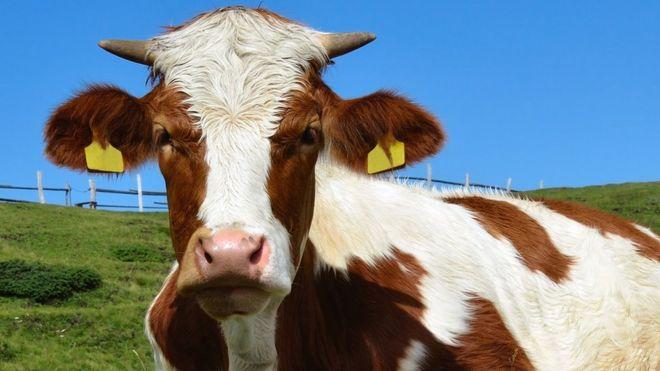 animal tb threatens human health say vets and doctors bbc news