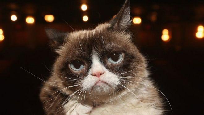 19da7f0ff غرامبي كات: نفوق القطة الأسطورة التي حازت شهرة عالمية - BBC News Arabic