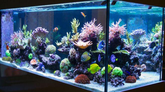 fish tank fumes land 10 in hospital bbc news