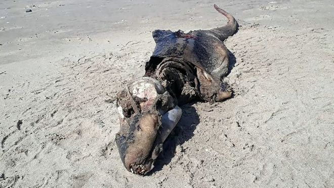Image of the carcass on the beach