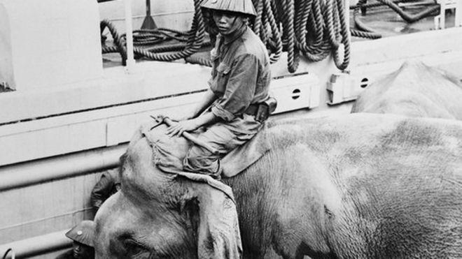 Voi Việt Nam