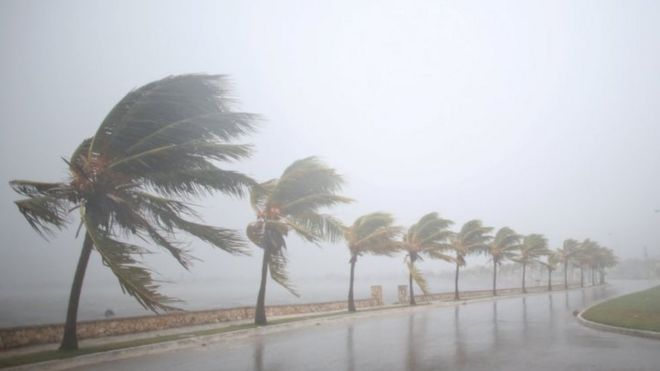 Palm trees sway in strong winds in Caibarien, Cuba. Photo: 8 September 2017