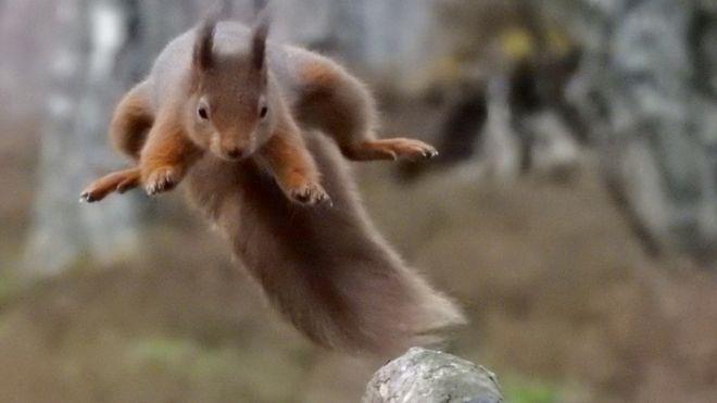 J Hope BTS Fans Save Squirrels For K Pop Stars Birthday