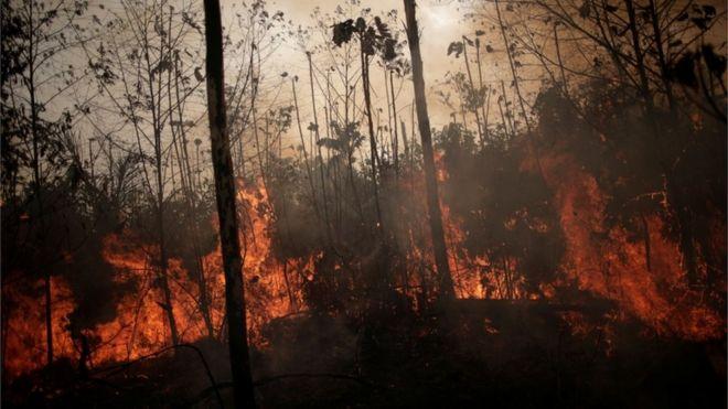 Resultado de imagem para as queimada na amazonia