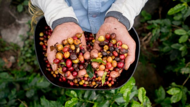 Image result for World's Coffee is Under Threat of Extinction