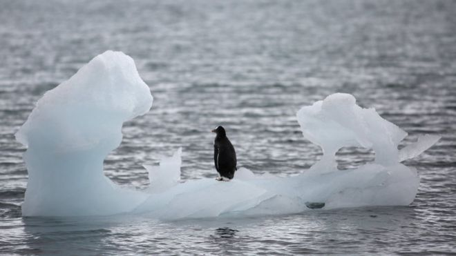 Pinguim na ponta do iceberg em Yankee Harbour